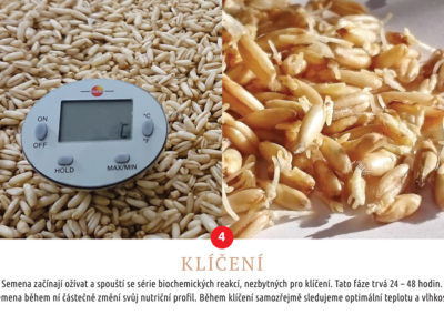 Klíčení semen, Semix